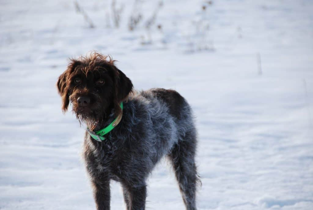 dog standing in snow.